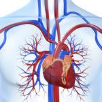 Генетический риск сердечно-сосудистых заболеваний
