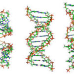 Выявление генных мутаций